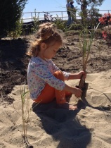 Maritime forest native planting in Bradley Beach, NJ